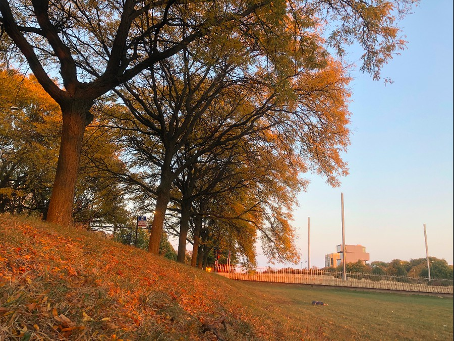 Golden light hits the trees lining the Midway Plaisance.